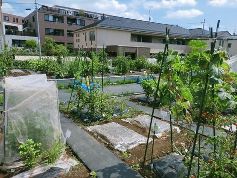 【川崎】シェア畑活動