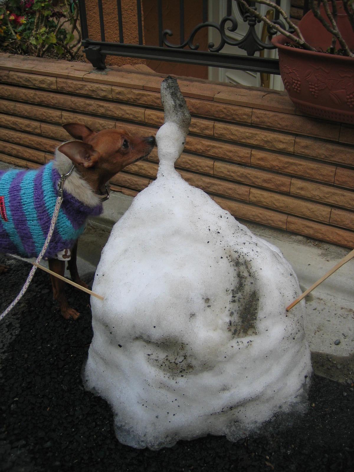 頑張れ!雪ちゃん!
