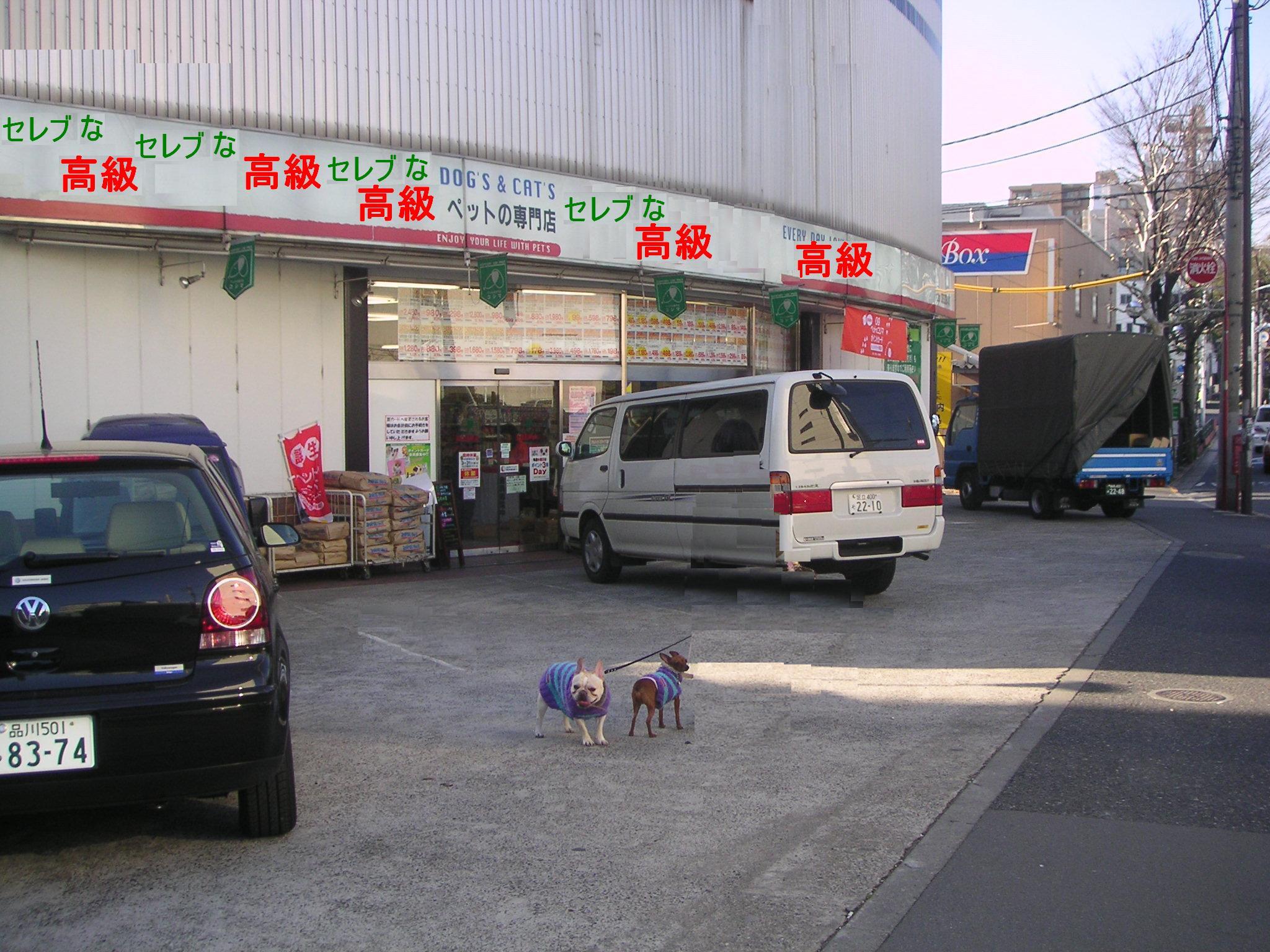 セレブなペット店