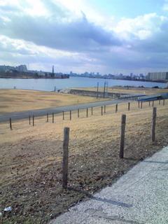 淀川右岸から下流を望む
