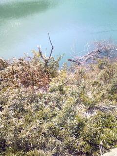 神戸水道千刈水源池