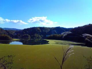 秋のダム湖すすき