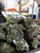 牡蛎発見!