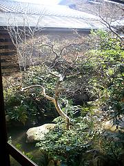 庭。。。(^^;)