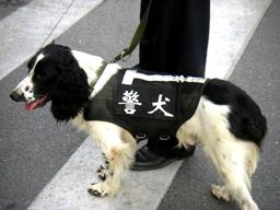 ずいぶんカワイイ警察犬