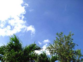 南国の空が嬉しい♪