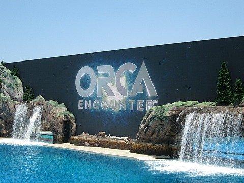 orca encounter