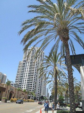 palm bldg