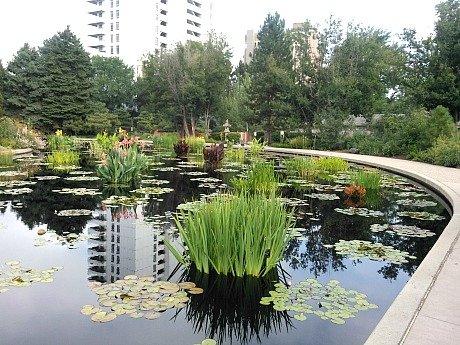 monet lilly pond