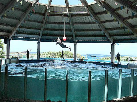 SLP dolphin jump