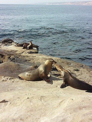 kissiong sea lions