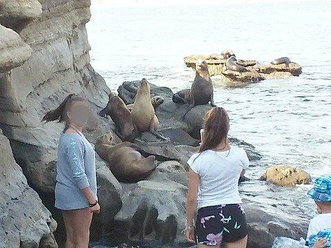 sea lions cove