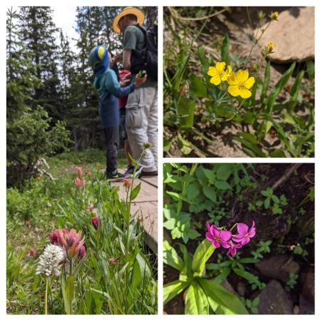 hiking4 flower collage