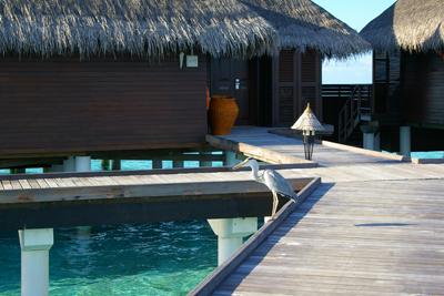 Maldives旅行記その6