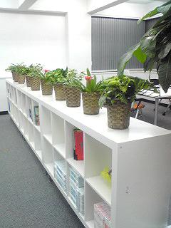 オフィスに花