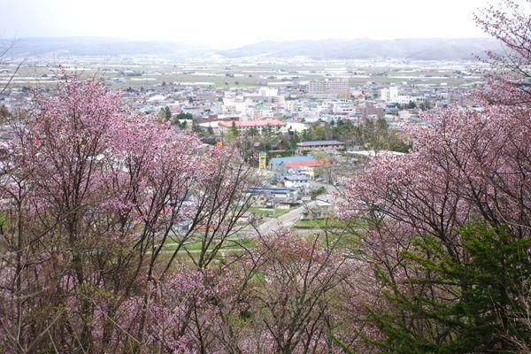 北海道 富良野、美瑛 旅行記その1