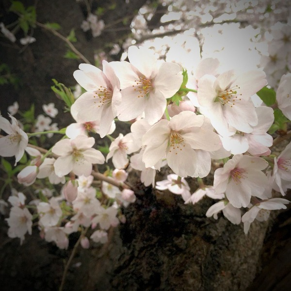 この春、色々。