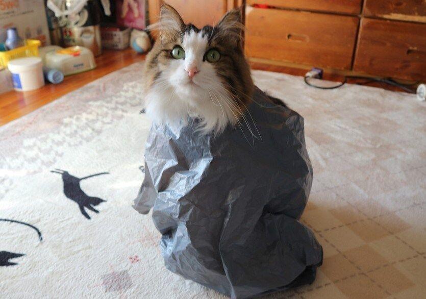独特の方法で暖をとる猫