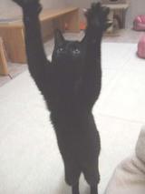 猫カフェサプリ