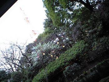 ホテル庭園から東京タワー
