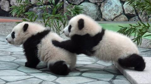 【画像】10人中9人はこの写真にパンダが写っていると思うらしい