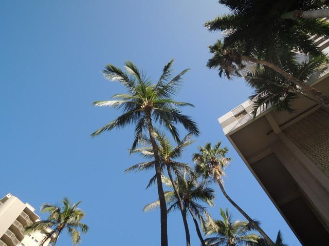 ハワイの青空♪