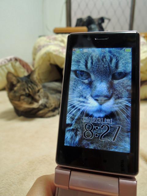 待ち受けの猫とそのモデル猫