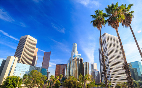 View-Of-Buildings-Through-Palm-Trees-Big-Bus-Tours-Los-Angeles