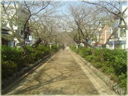鶴岡八幡宮を目指しましょう。