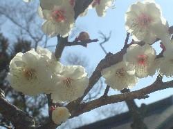 春が来ましたね。