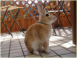 *6月*テラスにて看板ウサギ中のくっきー