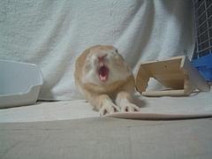 うさぎのあくび〜
