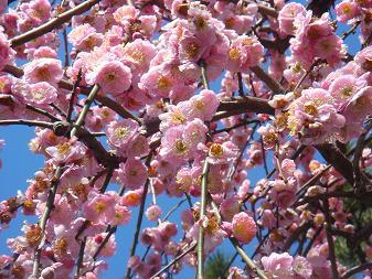 鎌倉の春**
