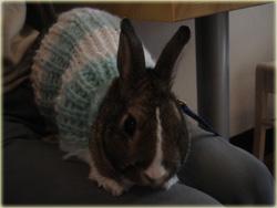 カナちゃん、セーター似合ってるよっ