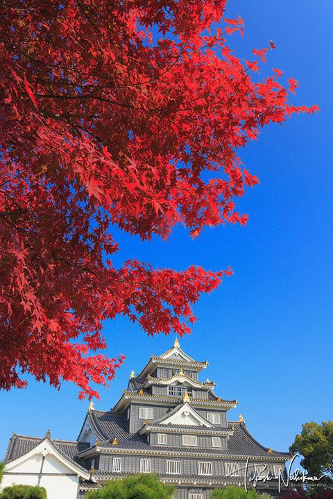 岡山県 岡山城と紅葉