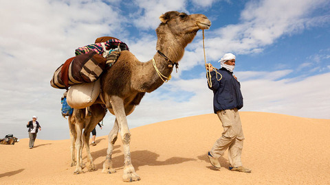 砂漠 ラクダ