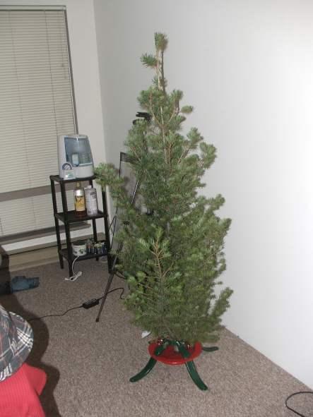 Xmas_tree2007_06.jpg