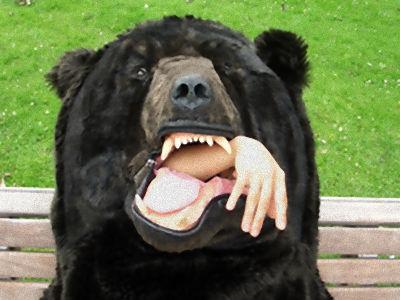 bear_006