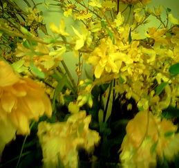 コロネット花