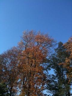 1123青い空