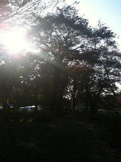 1123木漏れ日