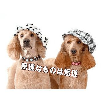 メッセージ入りポストカード「無理なものは無理」ハガキpostcard-photo by 楢崎 葉子