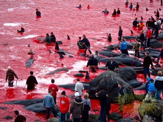 7歳白人少女「日本はイルカを殺さないで!」 ←ジャップは世界の嫌われ者だった YouTube動画>1本 ->画像>33枚