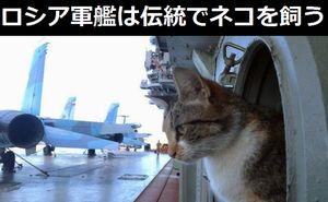 ロシア海軍の軍艦は伝統でネコを飼う!
