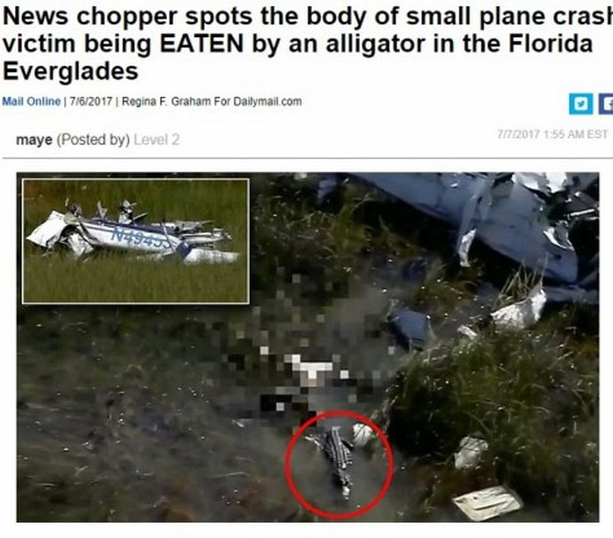 plane-crash-victim-eaten-by-alligator