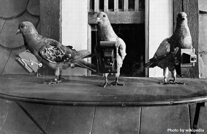 Pigeoncameras