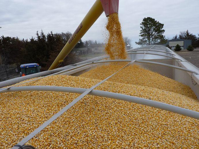 corn-554521_960_720