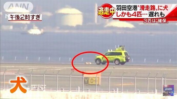 空港の滑走路上に見習い爆発物探知犬が侵入、警察が射殺措置…ニュージーランド!