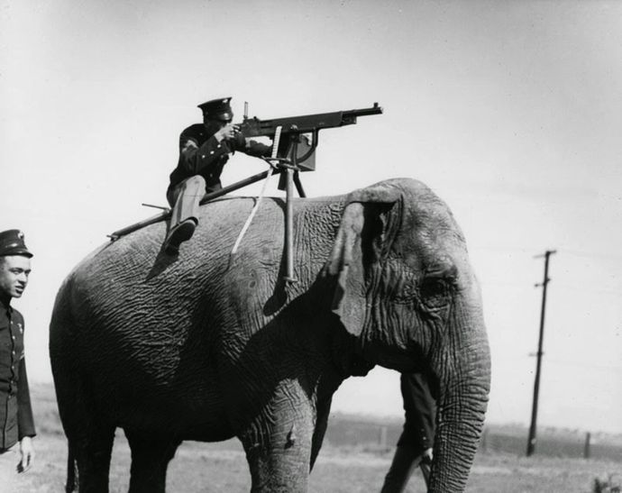 Elephant-mounted machine-gun, 1914