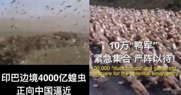 「アヒル バッタ 中国」の画像検索結果
